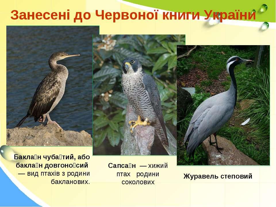 Занесені до Червоної книги України Бакла н чуба тий, або бакла н довгоно сий ...