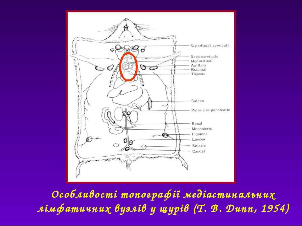 Особливості топографії медіастинальних лімфатичних вузлів у щурів (T. B. Dunn...
