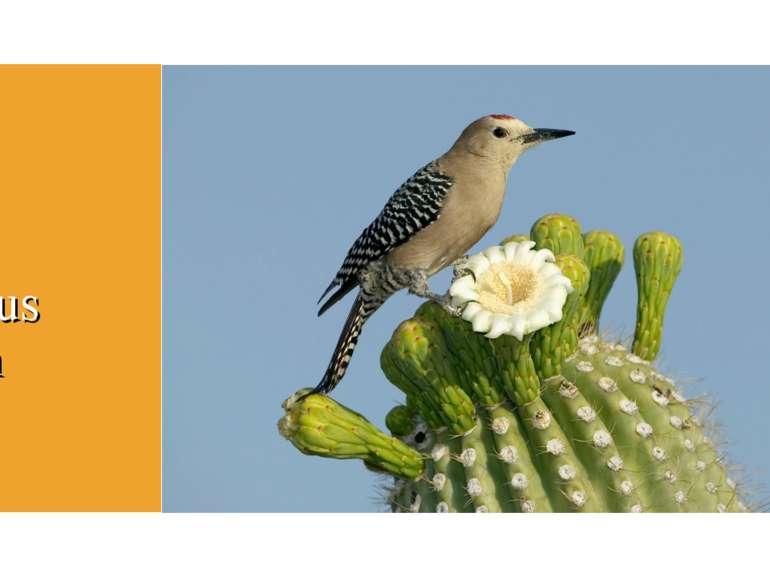 Bird Cactus wren