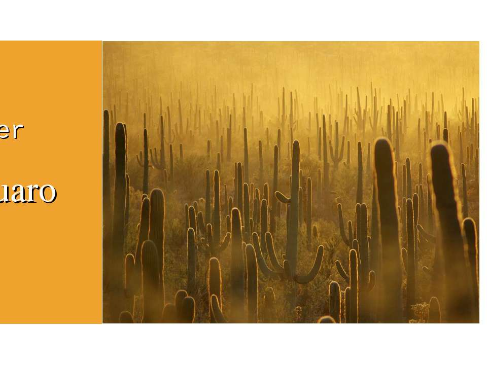 Flower Saguaro