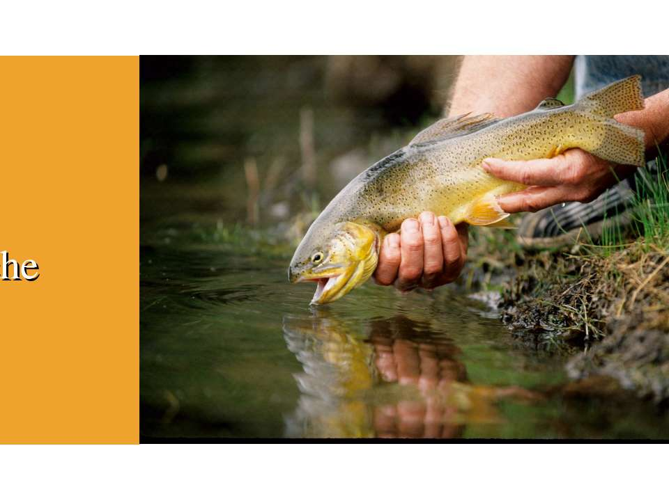 Fish Apache trout