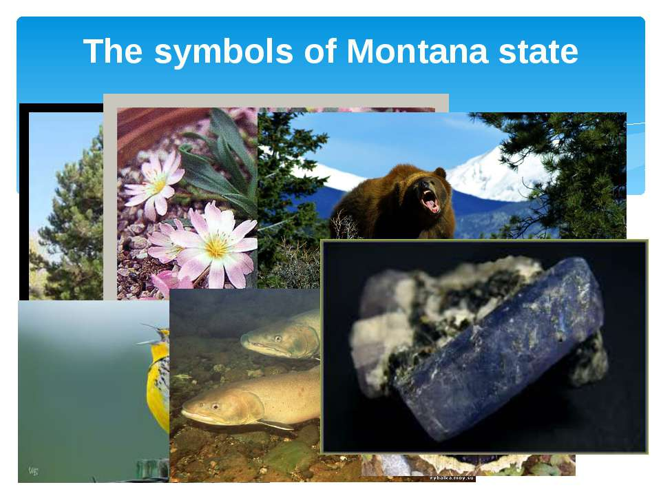 The symbols of Montana state