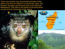 These rare animals may not look like primates at first glance, but they are r...