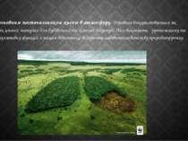 Ліси є основним постачальником кисню в атмосферу.Деревина використовується я...