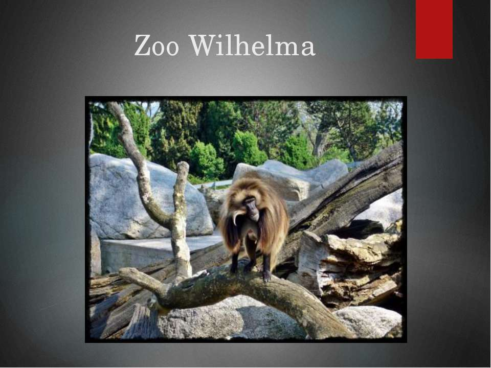 ZooWilhelma