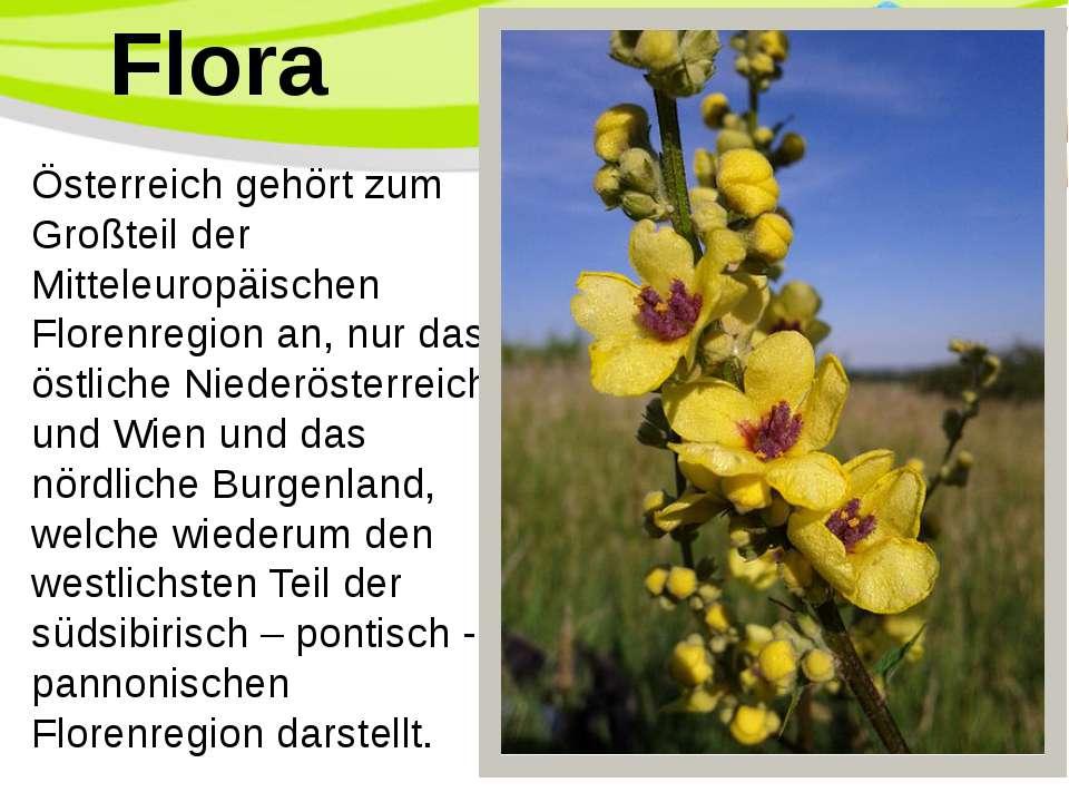 Österreich gehört zum Großteil der Mitteleuropäischen Florenregion an, nur da...