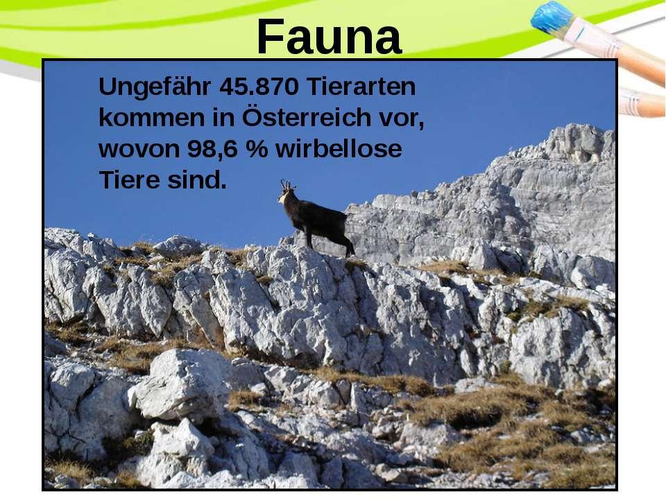 Fauna Ungefähr 45.870 Tierarten kommen in Österreich vor, wovon 98,6% wirbel...