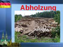 Abholzung
