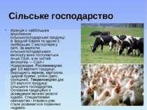 Сільське господарство Франція є найбільшим виробником сільськогосподарської п...