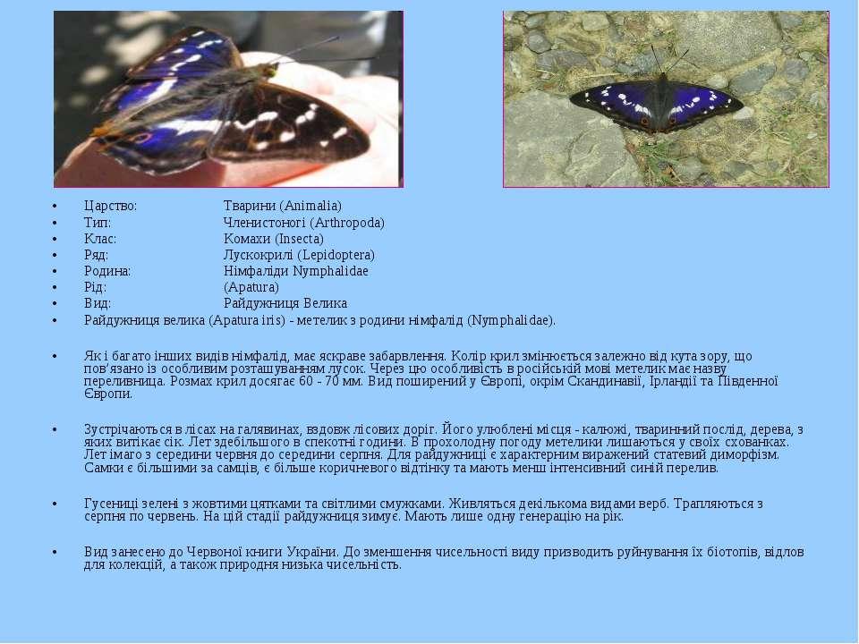 Царство: Тварини (Animalia) Тип: Членистоногі (Arthropoda) Клас: Комахи (Inse...