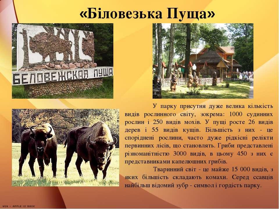 «Біловезька Пуща» У парку присутня дуже велика кількість видів рослинного сві...
