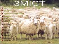 Назва презентації Короткий опис Структура сільського господарства Рослинництв...