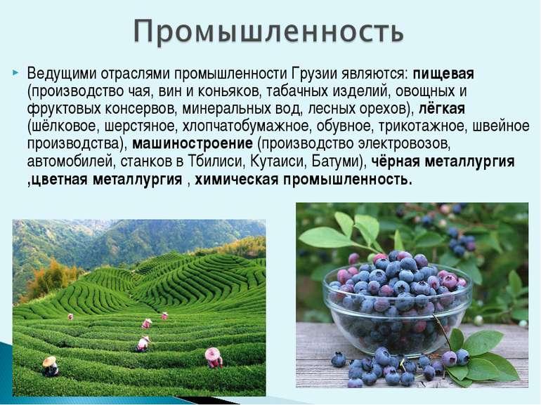 Ведущими отраслями промышленности Грузии являются: пищевая (производство чая,...