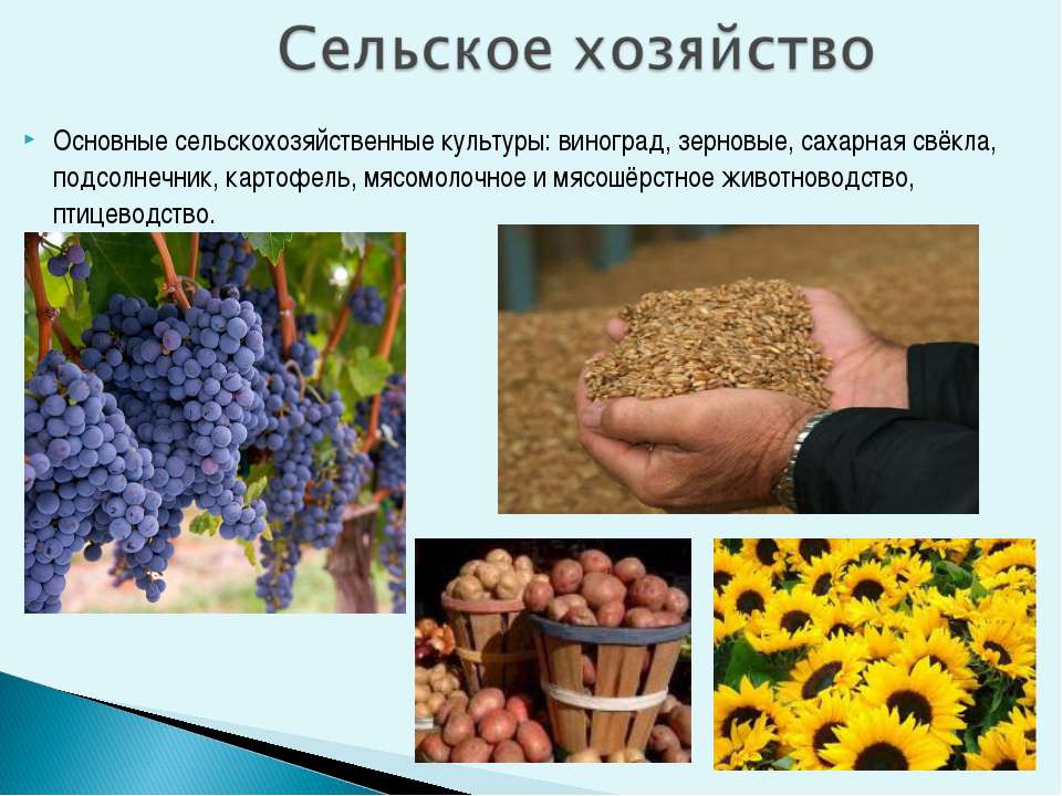 Основные сельскохозяйственные культуры: виноград, зерновые, сахарная свёкла, ...