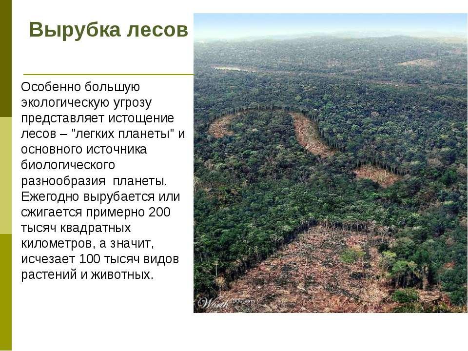 Вырубка лесов Особенно большую экологическую угрозу представляет истощение ле...
