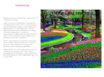 Кейкенхоф Правду кажуть,що Нідерланди – країна квітів,а особливо тюльпанів. С...