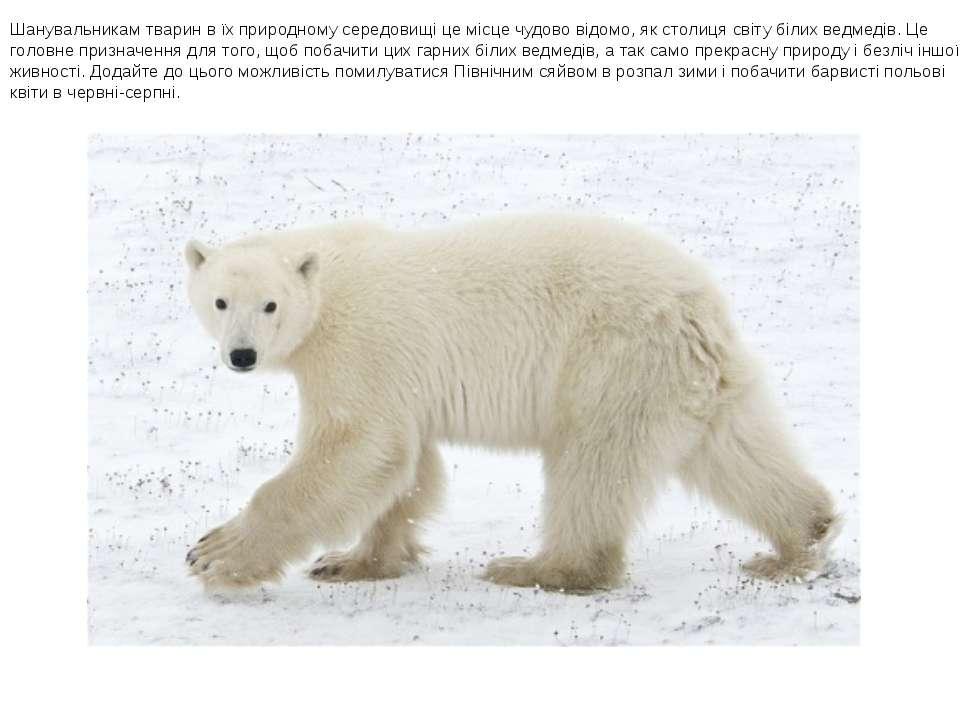 Шанувальникам тварин в їх природному середовищі це місце чудово відомо, як ст...