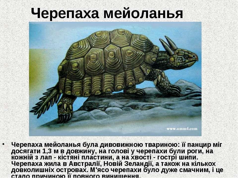 Черепаха мейоланья Черепаха мейоланья була дивовижною твариною: її панцир міг...