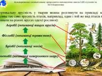 Вертикальну ярусність у тварин можна розглянути на прикладі комах (можлива та...