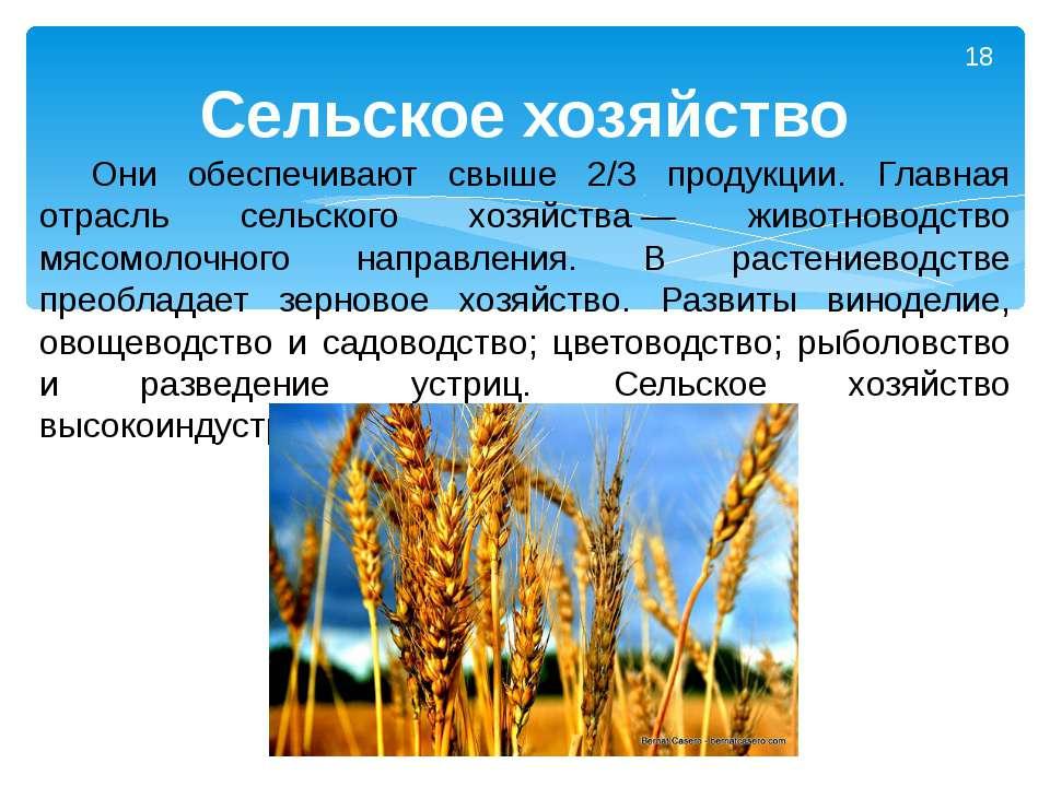 Они обеспечивают свыше 2/3 продукции. Главная отрасль сельского хозяйства— ж...
