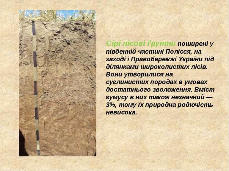 Сірі лісові ґрунти поширені у південній частині Полісся, на заході і Правобер...