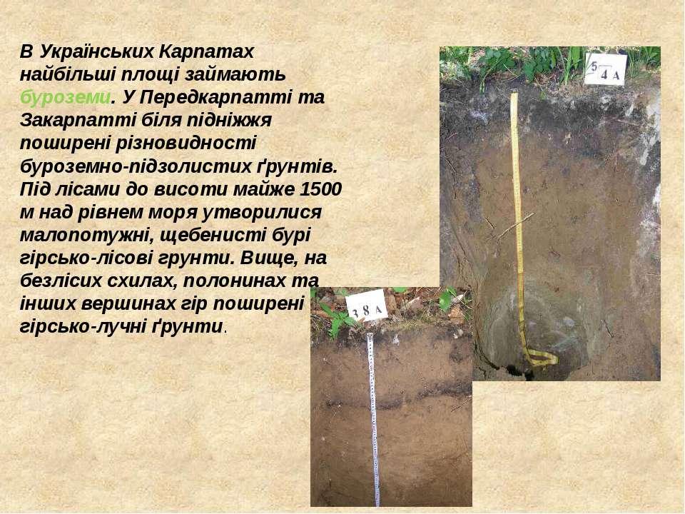 В Українських Карпатах найбільші площі займають буроземи. У Передкарпатті та ...
