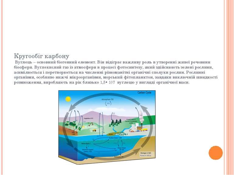 Кругообіг карбону Вуглець – основний біогенний елемент. Він відіграє важливу ...