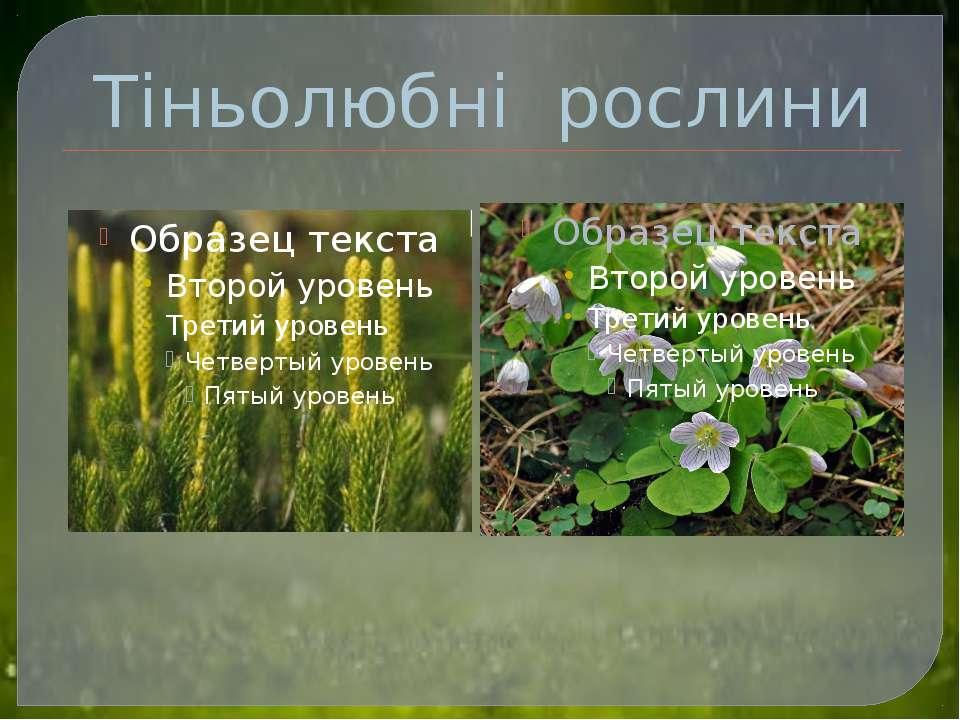 Тіньолюбні рослини