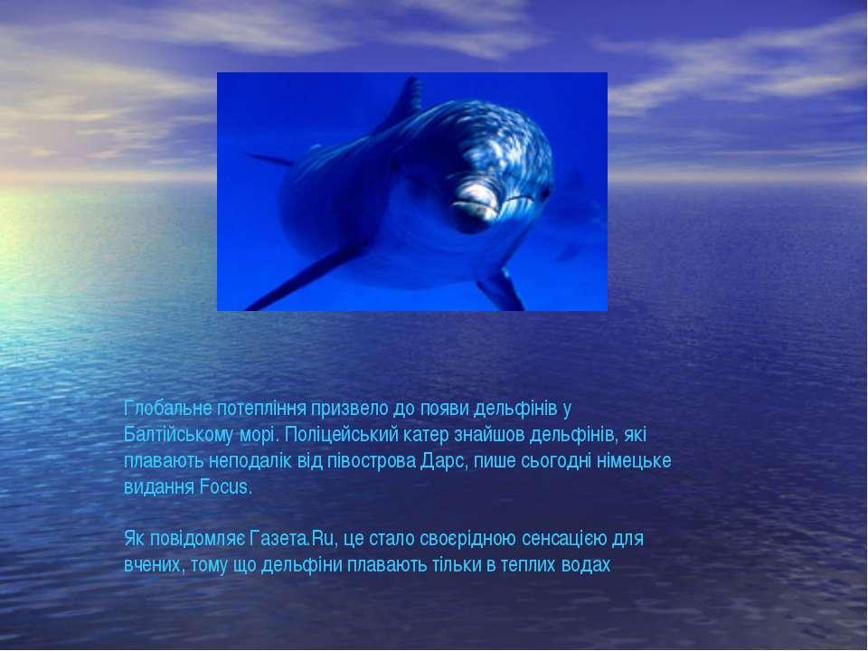 Глобальне потепління призвело до появи дельфінів у Балтійському морі. Поліцей...
