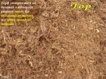 3 Торф Торф утворюється на болотах з відмерлих решток мохів. Це низькоякісне ...
