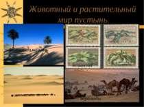 Животный и растительный мир пустынь. Финиковая пальма вельвичия верблюды