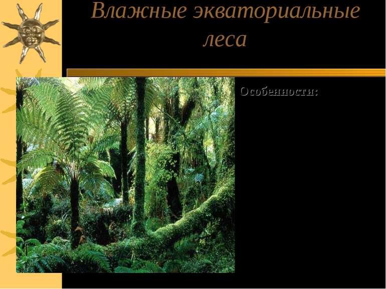 Влажные экваториальные леса Особенности: 1)Многоярусность 2)Вечнозеленность 3...