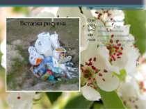 Стан українських лісів — для насаджень середнього віку характеристики реальни...