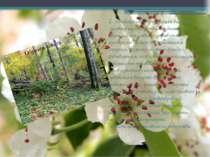 2. Неефективна організація ведення лісового господарства, поєднання функцій д...
