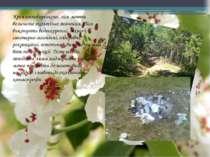 Крім господарського, ліси мають величезне екологічне значення. Ліси виконують...