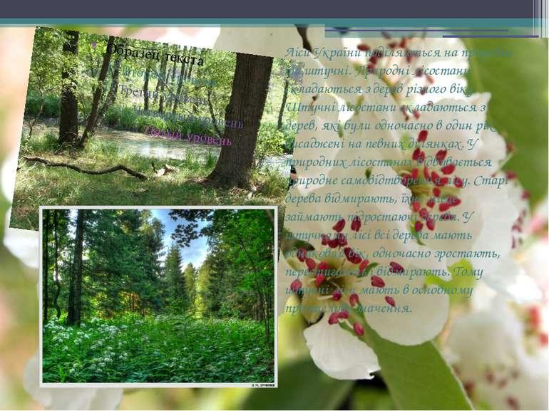 Ліси України поділяються на природні та штучні. Природні лісостани складаютьс...