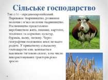Сільське господарство Тип с / г - середньоєвропейський. Переважає тваринництв...