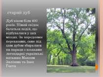 старий дуб Дуб віком біля 400 років. Німий свідок багатьох подій, що відбувал...