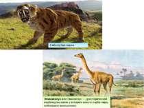 Саблезубая кошка Эпикамелус или Пикамелус — доисторический верблюд на спине у...