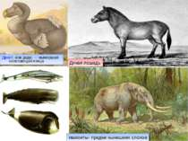 Дронт, или додо,— вымершая нелетающая птица Дикая лошадь мамонты- предки нын...