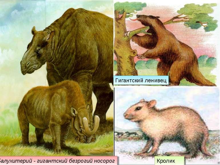 Гигантский ленивец Кролик Балухитерий - гигантский безрогий носорог