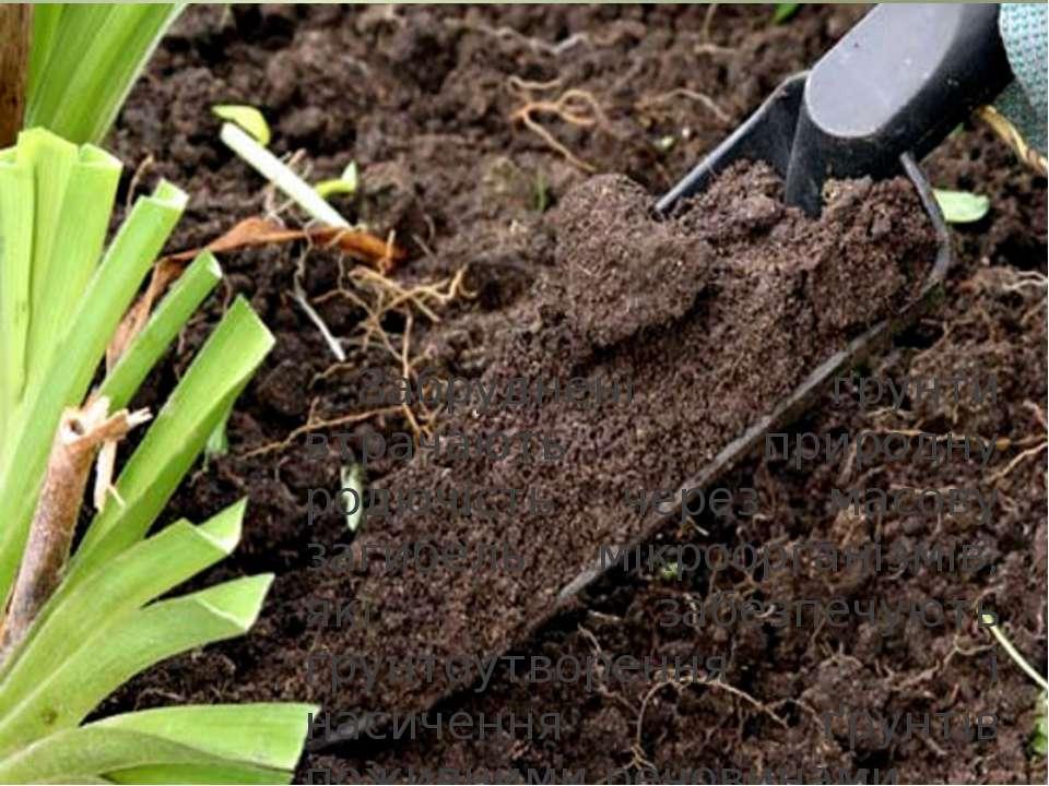 Забруднені ґрунти втрачають природну родючість через масову загибель мікроорг...