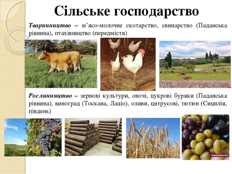 Сільське господарство Тваринництво – м'ясо-молочне скотарство, свинарство (Па...