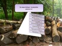* За маштабами переробки деревини