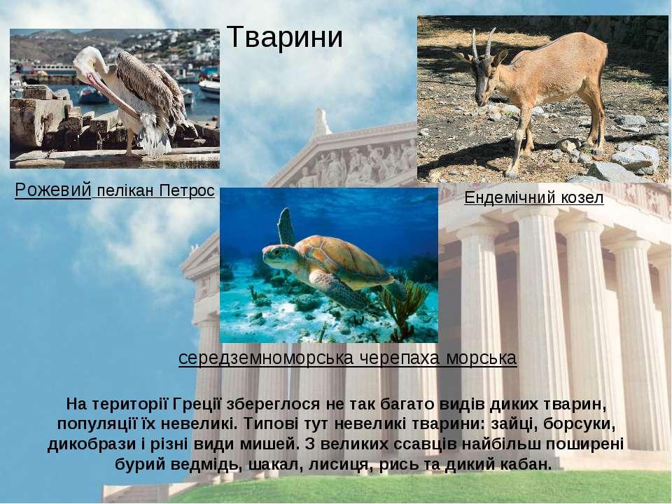 На території Греції збереглося не так багато видів диких тварин, популяції їх...