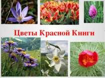 Цветы Красной Книги