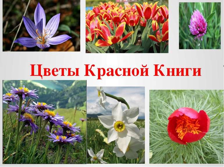 Какие цветы с в красной книге