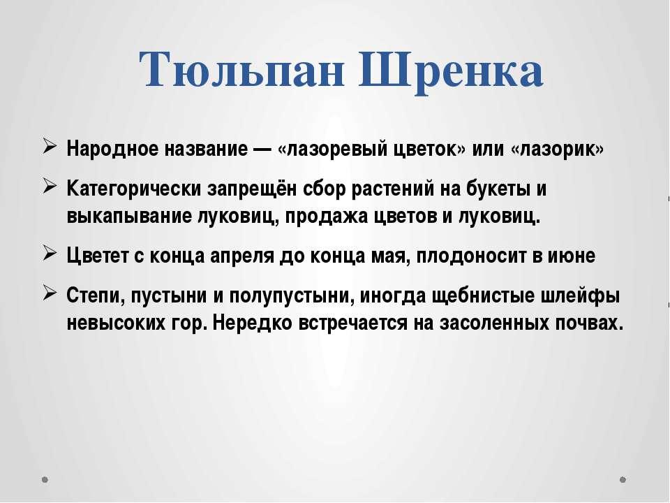 Тюльпан Шренка Народное название — «лазоревый цветок» или «лазорик» Категорич...