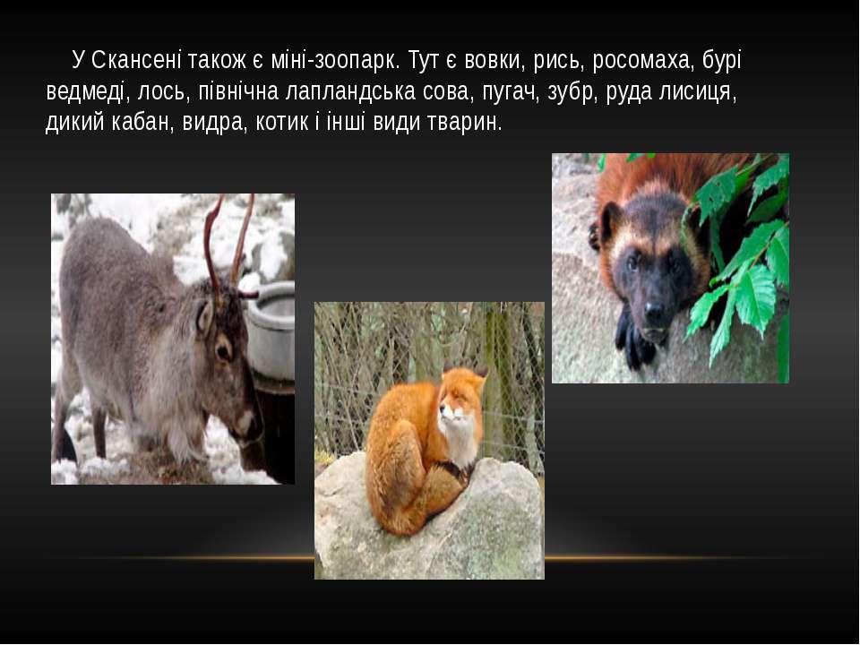 У Скансені також є міні-зоопарк. Тут є вовки, рись, росомаха, бурі ведмеді, л...
