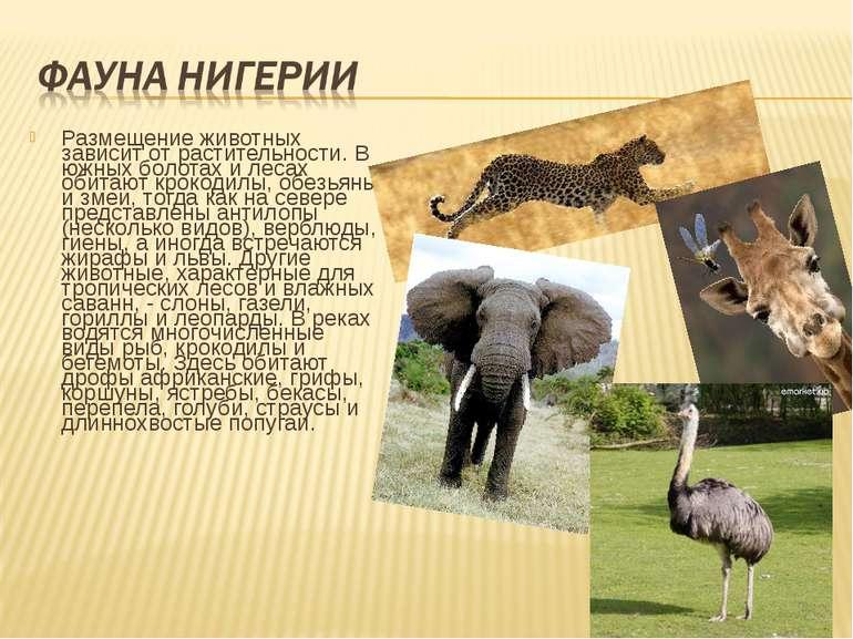 Размещение животных зависит от растительности. В южных болотах и лесах обитаю...